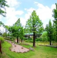 안산수인선 폐철도변 금개구리 생태공원 풍경(06.16)