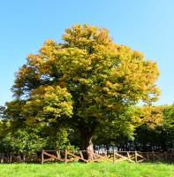 이동 보호수 조기나루 느티나무 가을 풍경(10.31)