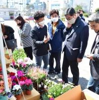 안산시 화훼농가 돕기 봄꽃 특별 판매장(03.18)