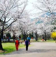부곡동의 봄 (04.20)