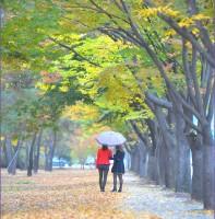 안산의 아름다운 길(10.30)