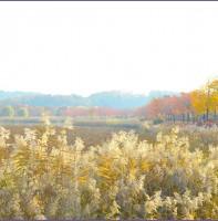 화랑유원지 가을 풍경(11.08)