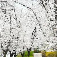 백운공원 풍경(4.13)