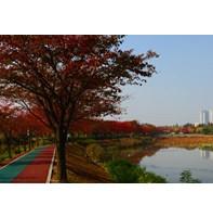 안산의 가을 풍경_화정천 화랑유원지 안산천 부곡동순환로(11.03)