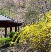 안산의 봄 풍경-백운공원(04.05)
