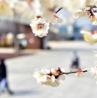 안산시 봄 풍경(03.17)