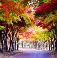 안산시 가을 풍경(11.09)