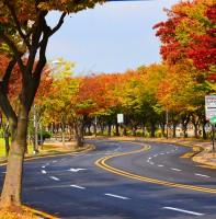 안산시 가을 풍경(11.01)