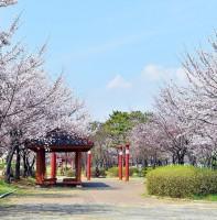 벚꽃 풍경(04.11)