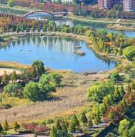 호수공원 가을 풍경(11.01)