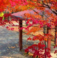 안산의 가을 풍경(11.11)