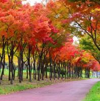 안산의 가을 풍경(11.07)