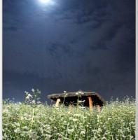 한가위 보름달과 메밀꽃(9.14)