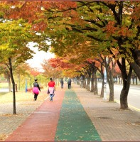 가을에 걷고싶은 안산의 단풍길(10.25)