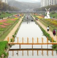 안산천 튤립.2010.04.