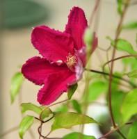 안산식물원의꽃들.(05.19)