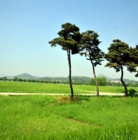 화랑유원지의봄풍경.(2010.5.20)