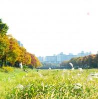 가을빛으로 물들어 가는 안산천(10.25)