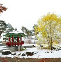 안산 첫눈 겨울 풍경 (11.26)